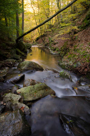 autumn forest: Mountain river with rapids in beautiful autumn forest