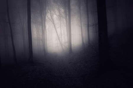 Mysterieuze donkere bos met mist in de herfstseizoen