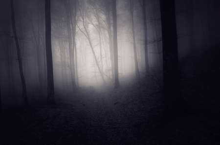 Mysterious dark forest with fog in autumn season