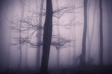 dark forest: Mysterious tree in dark forest with fog