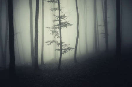 dark forest: Haunted dark forest on Halloween night with fog Stock Photo