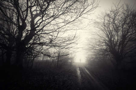 fog forest: Silhouette of man on road in haunted forest on Halloween Stock Photo