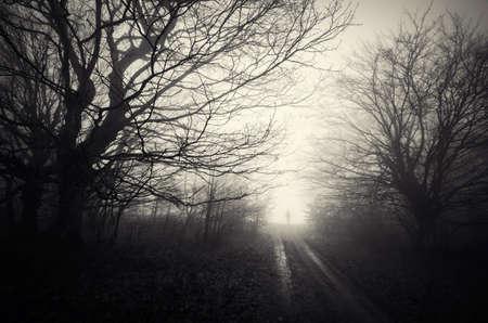 silueta hombre: Silueta del hombre en el camino en el bosque embrujado en Halloween