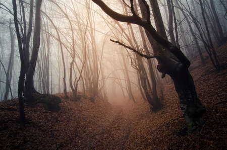 fog forest: Path trough autumn forest with fog Stock Photo