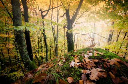fantasy background: Forest in autumn season covered with orange leaves Stock Photo
