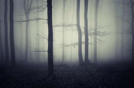 霧の夜にお化けの暗い森 写真素材