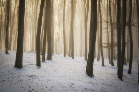 christmas morning: Enchanted magical forest with fog and light on Christmas morning
