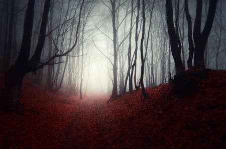 Griezelig donker bos met mist in de herfst met gevallen rode bladeren Stockfoto