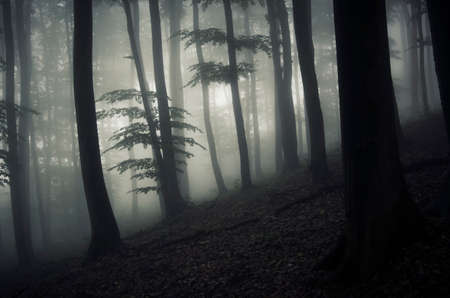 mystical forest: Dark mysterious forest with fog in Halloween night