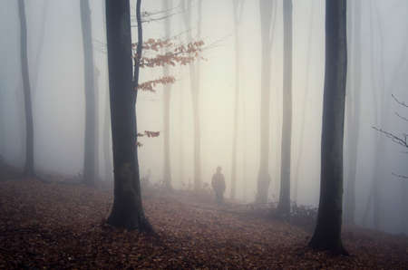 fog forest: Silhouette of man in mysterious fantasy autumn forest with fog Stock Photo