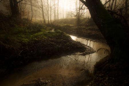 foresta di fantasia fiume attraverso incantato con la luce magica