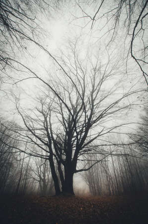 Vertical photo of tree in dark haunted mysterious forest with fog Stock Photo