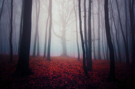 Tree in fog in autumn haunted forest with red leaves