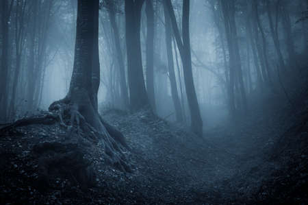 Night in haunted forest with fog Imagens