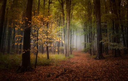 Herbstwald mit Nebel und bunte Bäume Laub