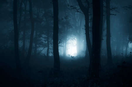 Blue fog in mysterious forest Imagens