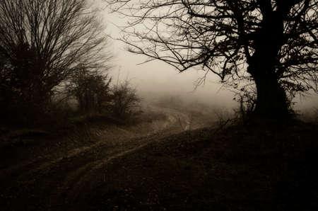 dark woods: Road trough dark woods Stock Photo