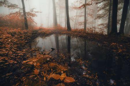 Lake in dark autumn spooky forest