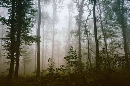 Green natural forest with fog