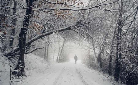 冬の森の道の男 写真素材