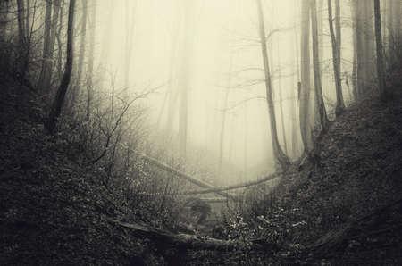 Dark scary haunted woods with fog on Halloween