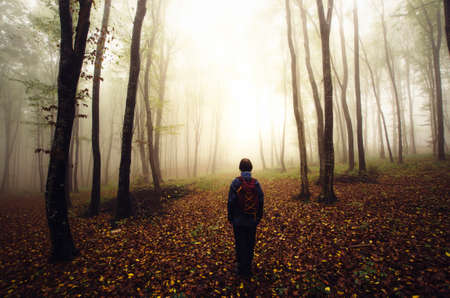 gloom: Hiking in mysterious forest with strange fog