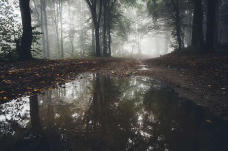 Forest lake with enchanted light and fog in autumn