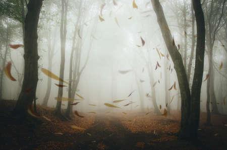Blätter durchgebrannt durch Wind auf Straße im Herbstwald mit mysteriösem Nebel Standard-Bild - 90330872