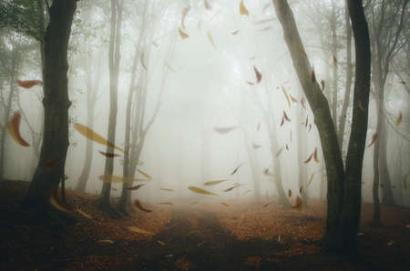 Leaves blown by wind on road in autumn forest with mysterious fog Stock Photo