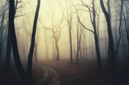 Road through enchanted woods with fog and mysterious light