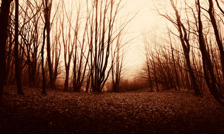 Red woods in late autumn. Red forest with clearing, Mist in mysterious dark red forest 免版税图像