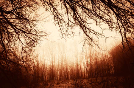 Mysterious autumn forest at sunset. Fog in dark woods at dusk
