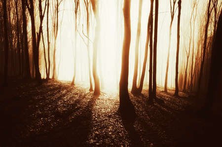 Sunset in mysterious forest with fog in late autumn
