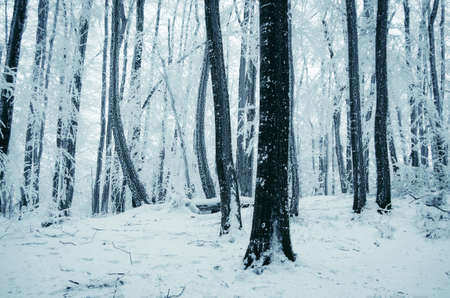 Frozen winter forest in extreme cold weather Stok Fotoğraf