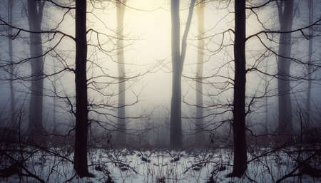 Mysterious winter forest background