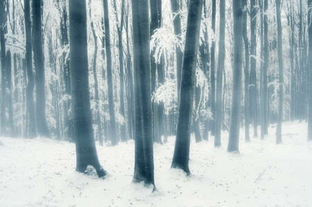 Fog in frozen winter forest with fog on cold day