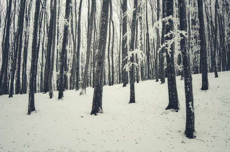 Fairy tale winter forest with white snow Stok Fotoğraf