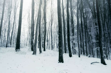 Cold winter woods with snow and mist Stok Fotoğraf
