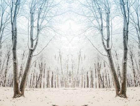 Surreal winter forest scene Banque d'images