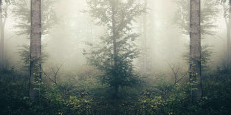 Trees in surreal misty woods. Mysterious dark fantasy fairy tale forest with fog in Transylvania