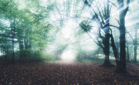 Magical light rays in enchanted forest with fog. Mysterious fantasy fairy tale forest with fog in autumn with sun rays 스톡 콘텐츠