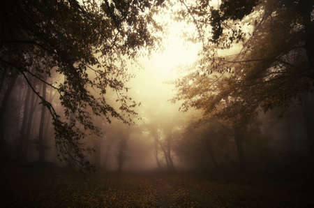 Dark spooky forest scene with fog. Misty dark surreal forest with fog at dusk