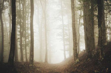 Path through surreal woods. Magical light in the misty forest