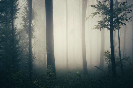 Haunted scary forest with fog on Halloween. Mysterious dark fantasy woods with mist. Night in the woods 스톡 콘텐츠
