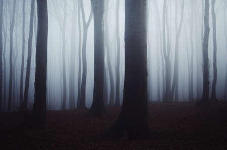 Dunkle, gespenstische Waldszene mit Nebel in der gespenstischen Halloween-Nacht