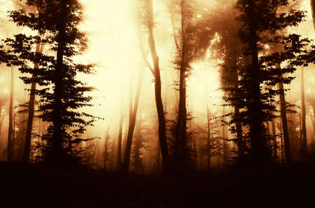 Surreal forest with mysterious fog at sunset Stock fotó