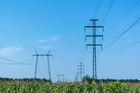 Two rows of pylons. In the foreground a field of corn. On supports hanging electric wires. Electricity, high voltage. In the background the blue sky and white clouds. Visible on support insulators.