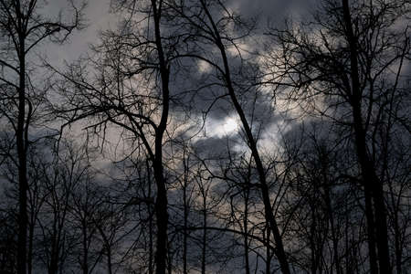Scary night forest. The moon shines through the clouds. Silhouettes of trees and branches against the night sky. Bare trees without leaves. Banco de Imagens