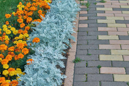 Flowerbed with orange and yellow flowers along the pavement of paving stones rectangular. The pavers are laid out in the form of a pattern. The decoration of the back yard. Background or backdrop. Stock Photo
