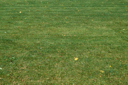 The surface of a lawn or lawn with trimmed green grass. A few yellowed autumn leaves lie on the grass. Lawn in the back yard. Background or backdrop. Texture. Banco de Imagens